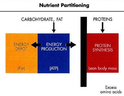 calorie partitioning
