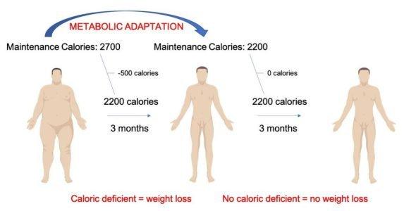 aanpassingen metabolisme