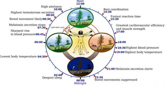 wat is een circadiaans ritme